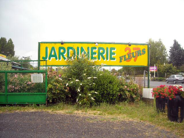 P pinieriste vente arbuste loches jardinerie fleurs 37 for Jardinerie internet