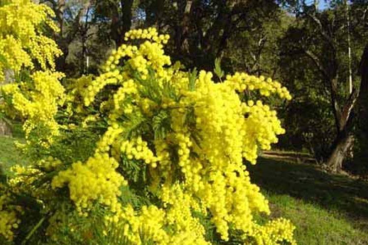plantes vertes fleuries am nagement de jardin jou l s tours jardinerie fleurs 37. Black Bedroom Furniture Sets. Home Design Ideas