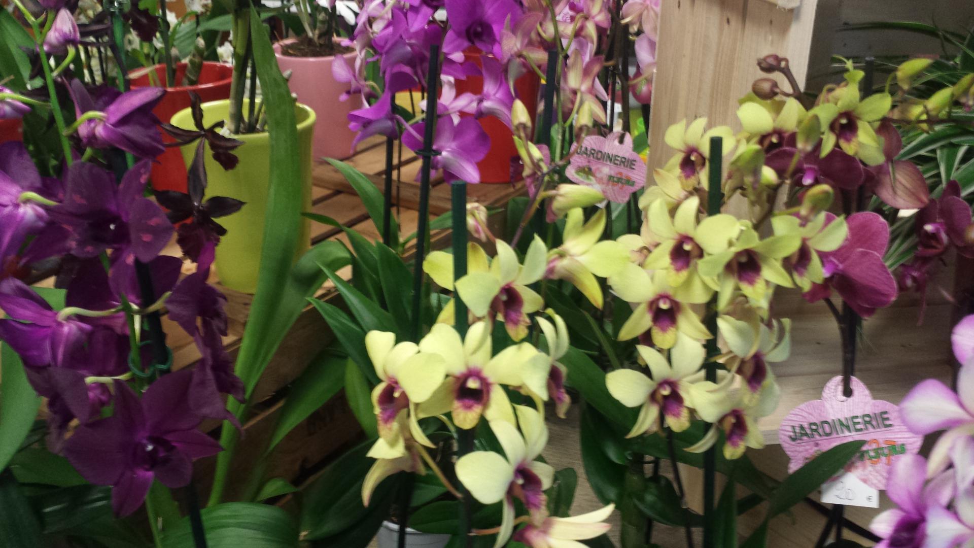 Achat plante verte loches sarl jardinerie fleurs 37 for Achat plante jardin