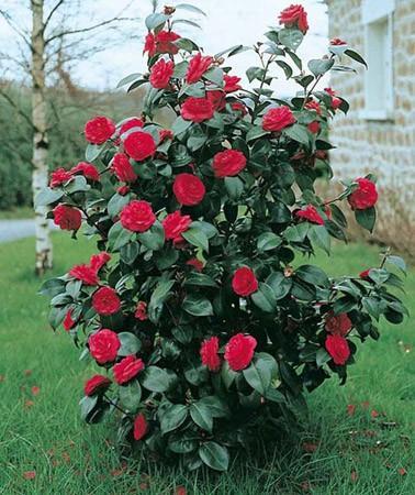 Plantes vertes fleuries am nagement de jardin jou l s tours jardinerie fleurs 37 - Plante de terre de bruyere ...