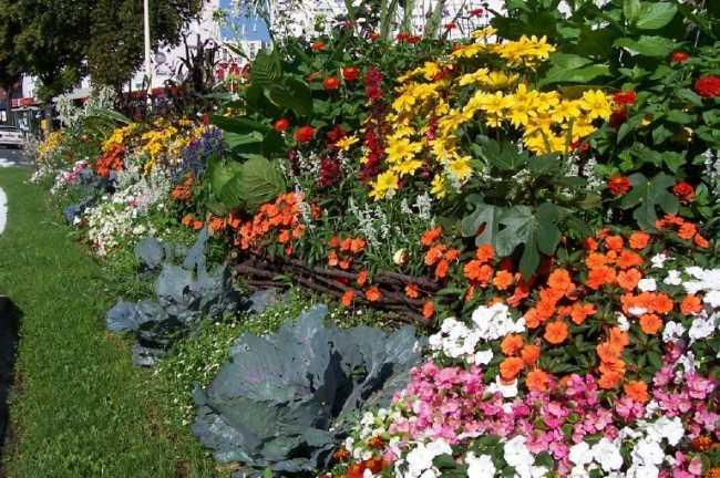Plantes vertes fleuries, aménagement de jardin - Joué-lès-Tours ...