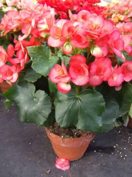 plantes vertes fleuries am nagement de jardin jou l s. Black Bedroom Furniture Sets. Home Design Ideas